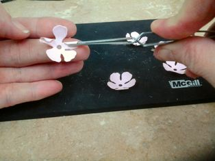 How to Make a Handmade Mothers Day Card